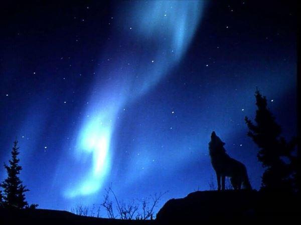 Upcoming Event - Lobo Harvest Howl