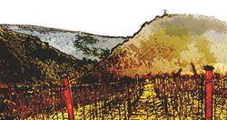 Lagniappe Peak Vineyards